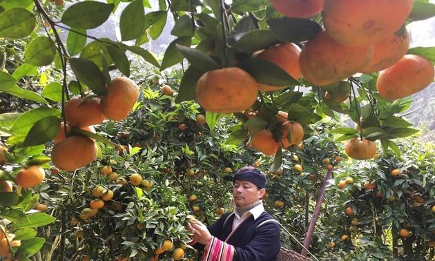 Tang Van Binh, antiguo soldado que avanza desde el modelo agrícola