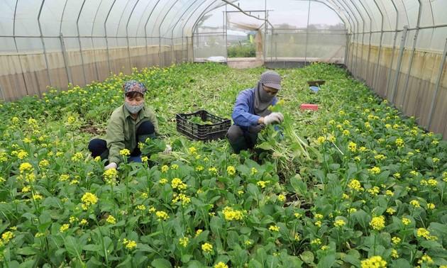 Aumenta la exportación de frutas y hortalizas de Vietnam