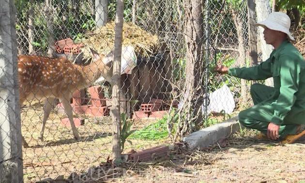 ザライ省での養鹿価値による経済的価値