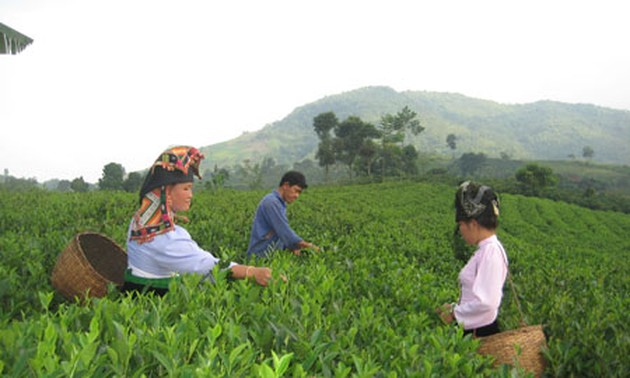 Vietnam Farmers' Association's role in building new rural areas