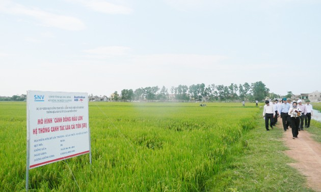 Quang Binh's agricultural production is thriving thanks to large-scale field model