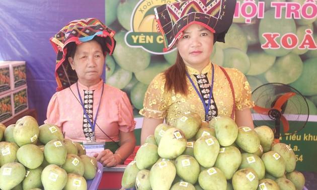Son La farmers develop Yen Chau mango brand