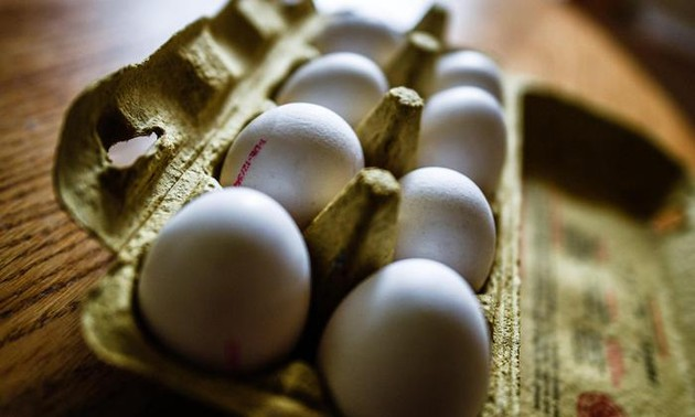 Italy seizes products over Fipronil eggs scandal
