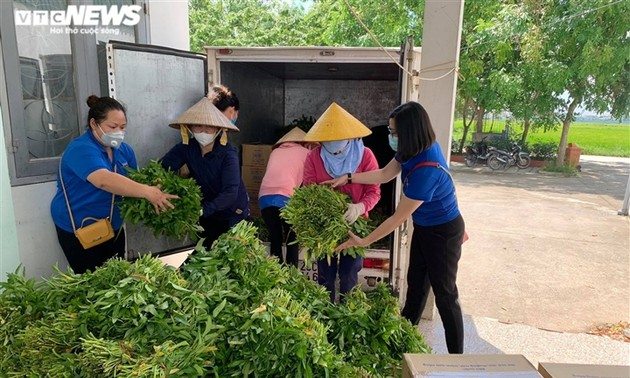 Nông dân Bắc Ninh hái 3.000 mớ rau tặng khu vực bị cách ly
