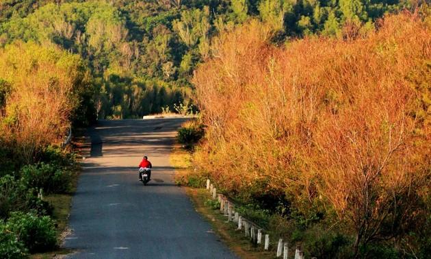 Thức dậy ở miền nắng đẹp Phú Yên