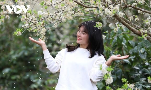 ソンラ省の白いスモモの花