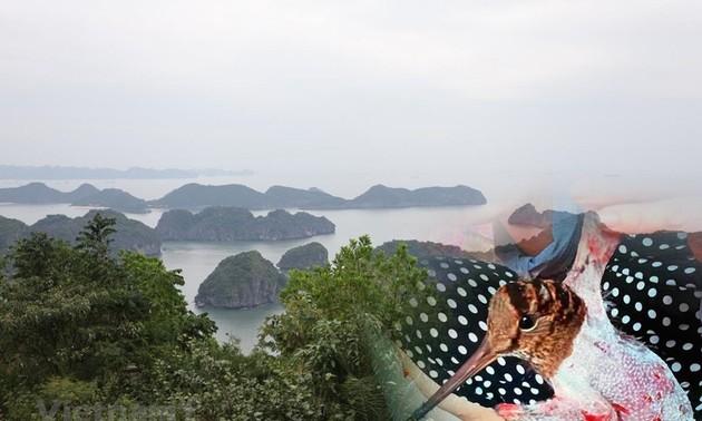 ベトナム 生態系の回復に尽力