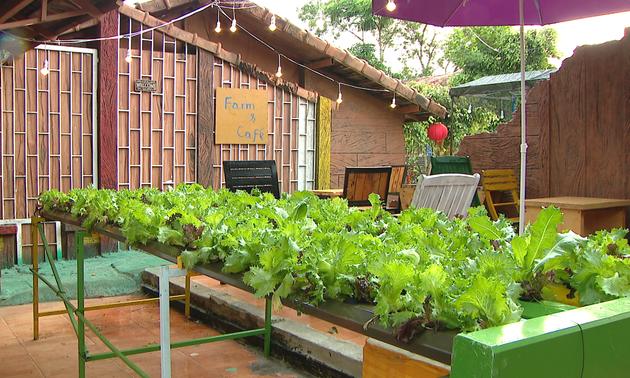 农园民宿旅游——嘉莱省旅游发展的新方向