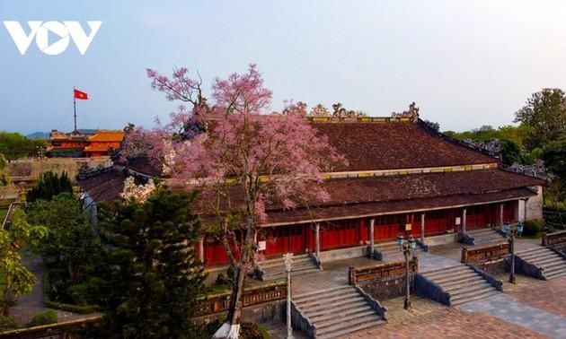 Wutong-Bäume blühen in der Hue-Zitadelle