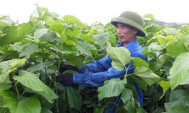 Tran Yen: Der erste ländliche Kreis neuen Stils im Nordwesten
