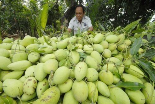 AS akan mengizinkan impor mangga segar dan sawo duren Vietnam