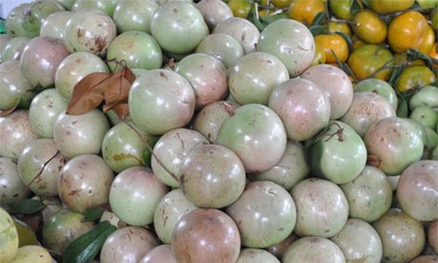 Buah Sawo Duren Vietnam resmi masuk pasar AS