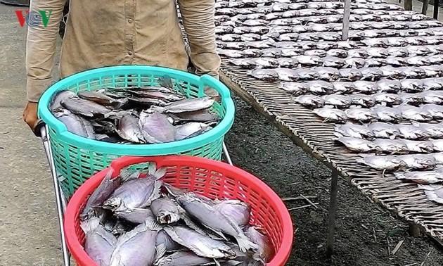 Desa ikan sepat siam kering di Provinsi Ca Mau pada musim panenan menyambut Hari Raya Tet
