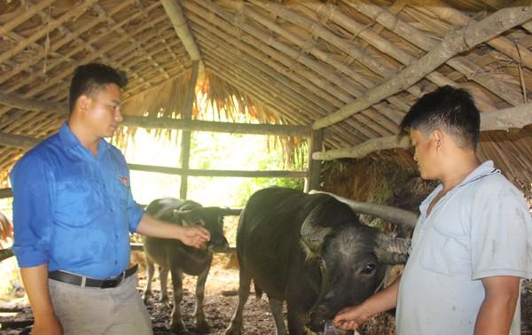 Kabupaten Quang Binh, Provinsi Ha Giang menggunakan sumber modal pinjaman prioritas untuk mengembangkan pertanian