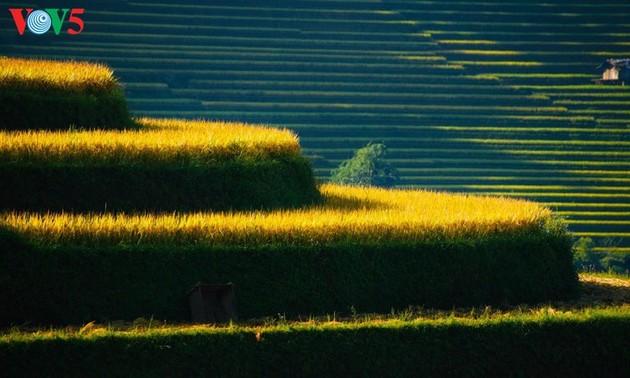 Великолепные рисовые террасы в уезде Мукангчай