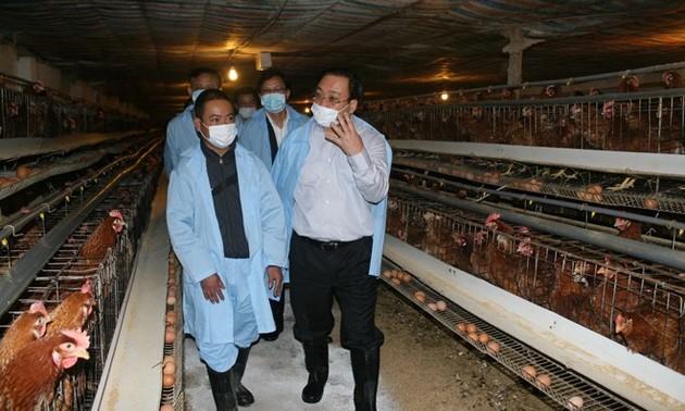 Phó Thủ tướng Hoàng Trung Hải kiểm tra công tác phòng, chống dịch cúm gia cầm tại Lạng Sơn
