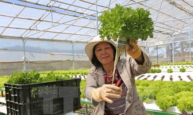 Nhật Bản giới thiệu cơ hội đầu tư vào nông nghiệp Việt Nam