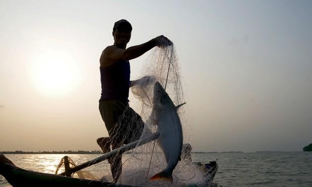 Về cồn An Lộc săn cá bông lau sông Hậu