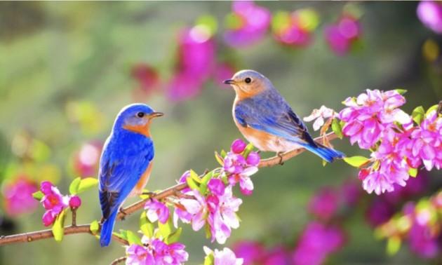 Mùa xuân và những thanh âm của cuộc sống muôn màu