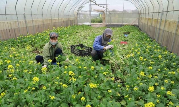 Việt Nam xuất khẩu hơn 944 triệu USD giá trị hàng rau quả ra nước ngoài