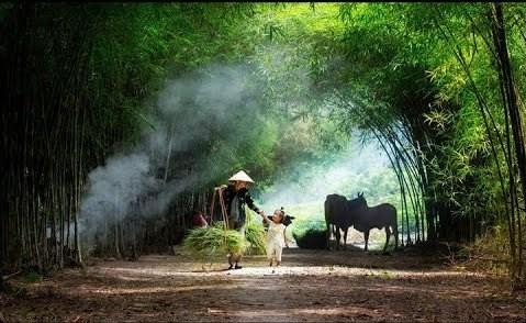Mẹ quê - Trần Thị Thanh Nga, LB Nga