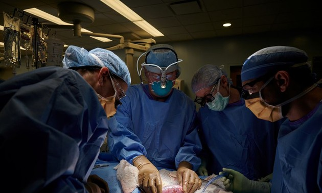 US surgeons successfully test pig kidney transplant in human patient