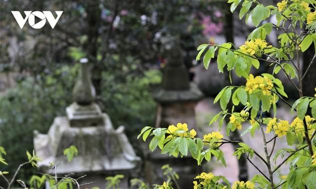 Желтые абрикосовые цветы на горе Йенты