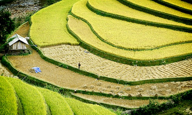 A Culture Tourism Week of Hoang Su Phi terraced rice fields