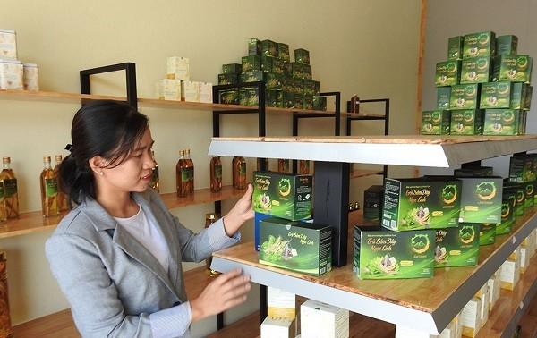 Businesswoman promotes trademark of Kon Tum ginseng