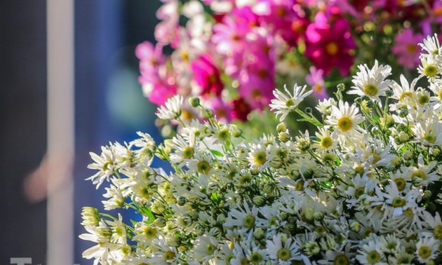 Ox-eye daisies create marvelous scenery on Hanoi streets