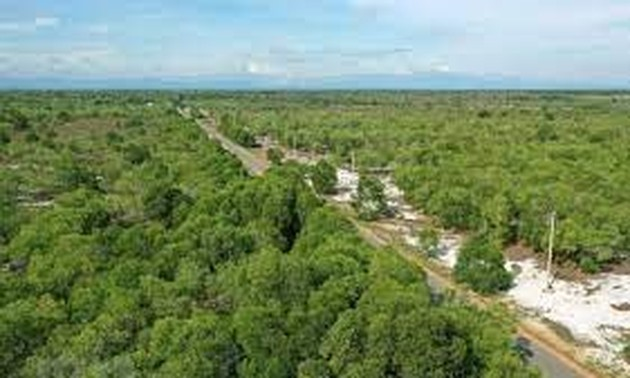 Forestry production expected to rise 5.5% annually in 2021-2025 period