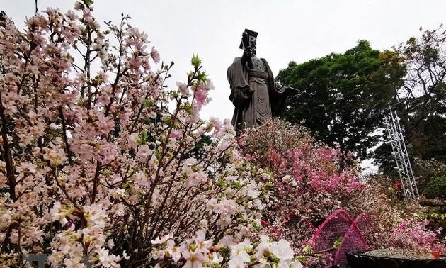 20 nghìn cành hoa Anh đào khoe sắc giữa Thủ đô Hà Nội