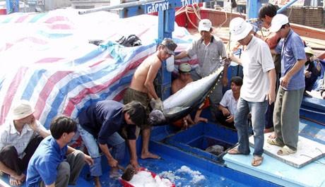 Provincia de Phu Yen promueve la explotación de atún