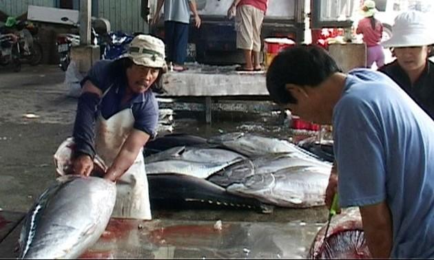 Provincia de Phu Yen aplica modelos de procesamiento de atún en cadenas de valor