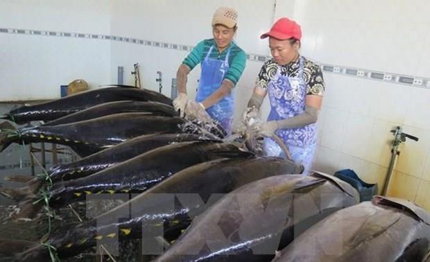 Grecia aumenta importación de atún vietnamita