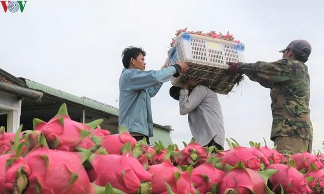 Productos vietnamitas ante gran oportunidad de exportarse al mercado indio