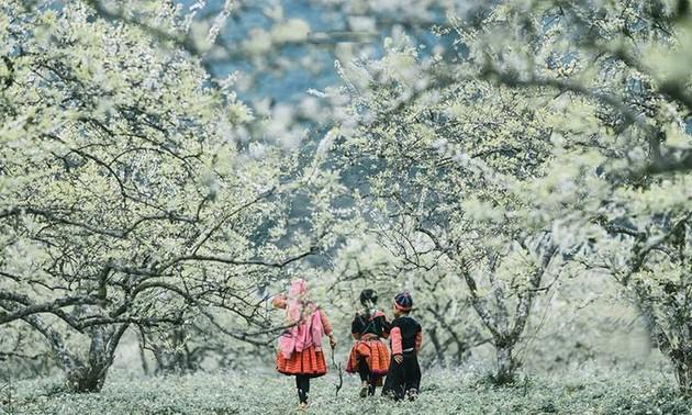 Los destinos turísticos vietnamitas que se deben visitar en el Año Nuevo 2021