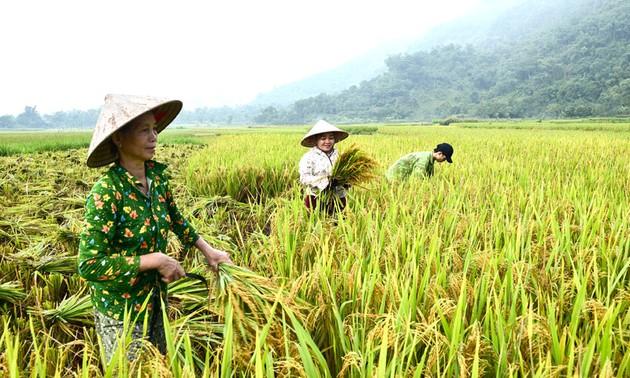 El sector agrícola de Vietnam espera una temporada dorada en 2021