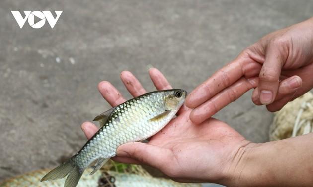 El pescado Bong, un ingrediente fundamental en la gastronomía de los Tay en Yen Bai