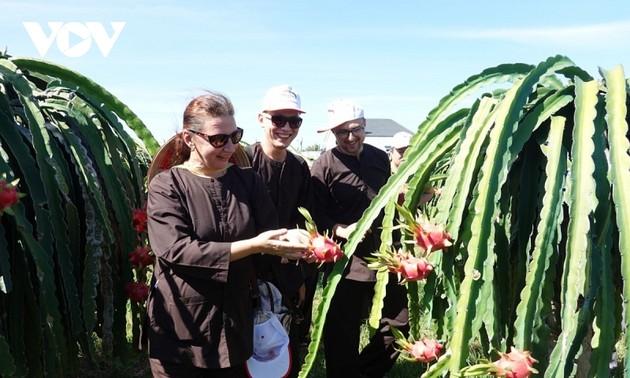 Binh Thuan desarrolla el turismo vinculado con huertos frutales