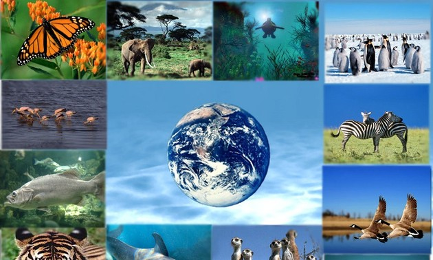 COP15 Biodiversité: des négociations en ligne pour tenter de sauver nos écosystèmes