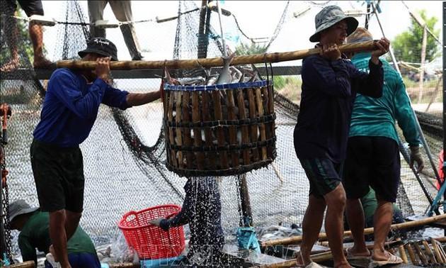 Les exportations de produits agricoles, sylvicoles et aquatiques en hausse de 21,6% les 8 derniers mois