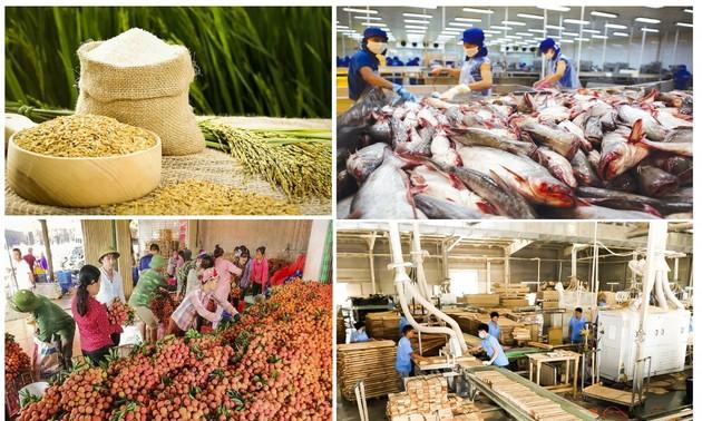 อุตสาหกรรมการเกษตรเวียดนามฟันฝ่าอุปสรรคจากการแพร่ระบาดของโรคโควิด - 19 มุ่งสู่ฤดูการเก็บเกี่ยว