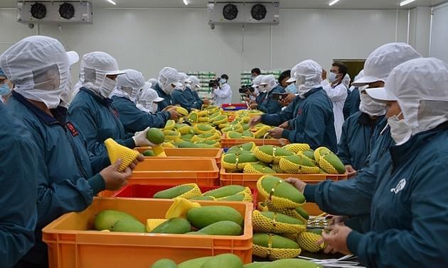 การส่งออกผักและผลไม้ไปยังตลาดใหญ่ๆมีการขยายตัวอย่างรวดเร็ว