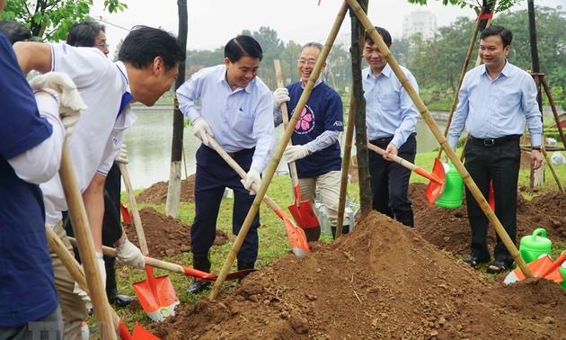 Hoa anh đào, cầu nối của tình hữu nghị Việt Nam-Nhật Bản