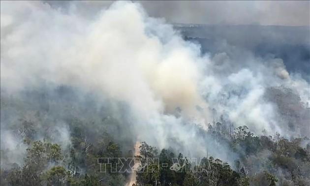 Лесной пожар в Австралии уничтожил половину уникального острова Фрейзер