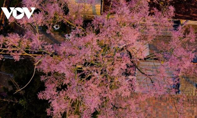 Нгодонг – Придворный цветок в городе Хюэ