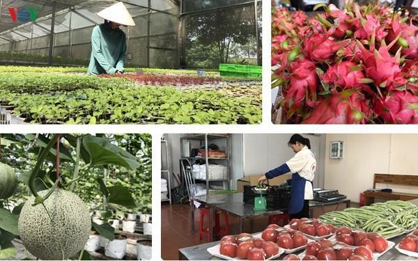 Thúc đẩy thương mại nông sản Việt – Trung trong bối cảnh dịch Covid-19