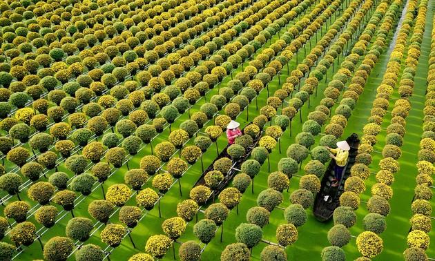 Những làng hoa ngày giáp Tết