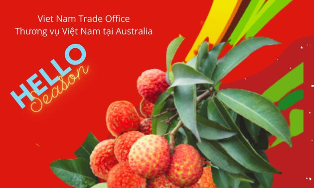 Khoảng 100 tấn vải Việt Nam chuẩn bị xuất khẩu sang Australia